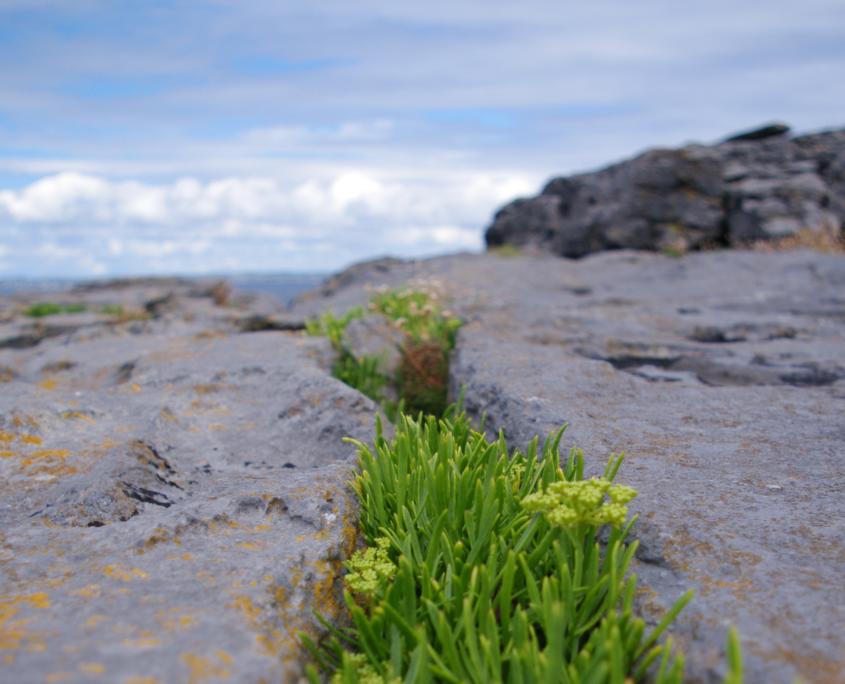 immagine rilassante di fiori e mare sullo sfondo